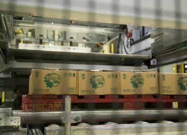 印尼可口可乐装瓶商